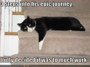 funny-pictures-cat-is-three-steps-into-an-epic-journey