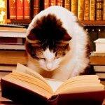 Reader-cat-edited-